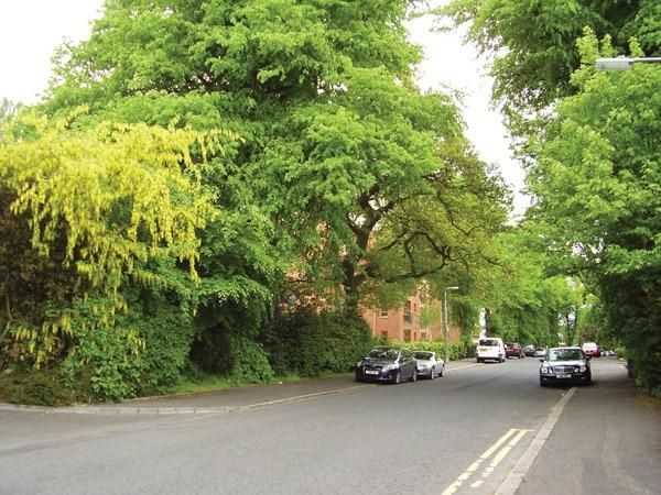 belfast-leafy-suburbs