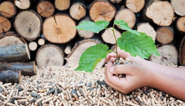 Photo of The renewable options